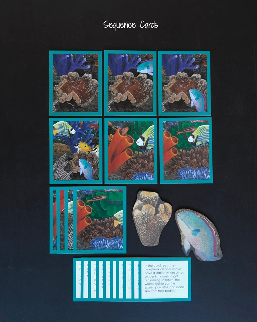 Coral Reef Habitat Mat-story cards