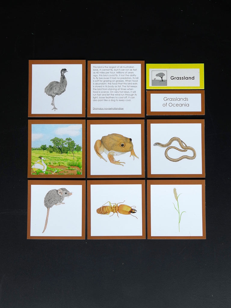 Oceania Biome Cards-Elementary