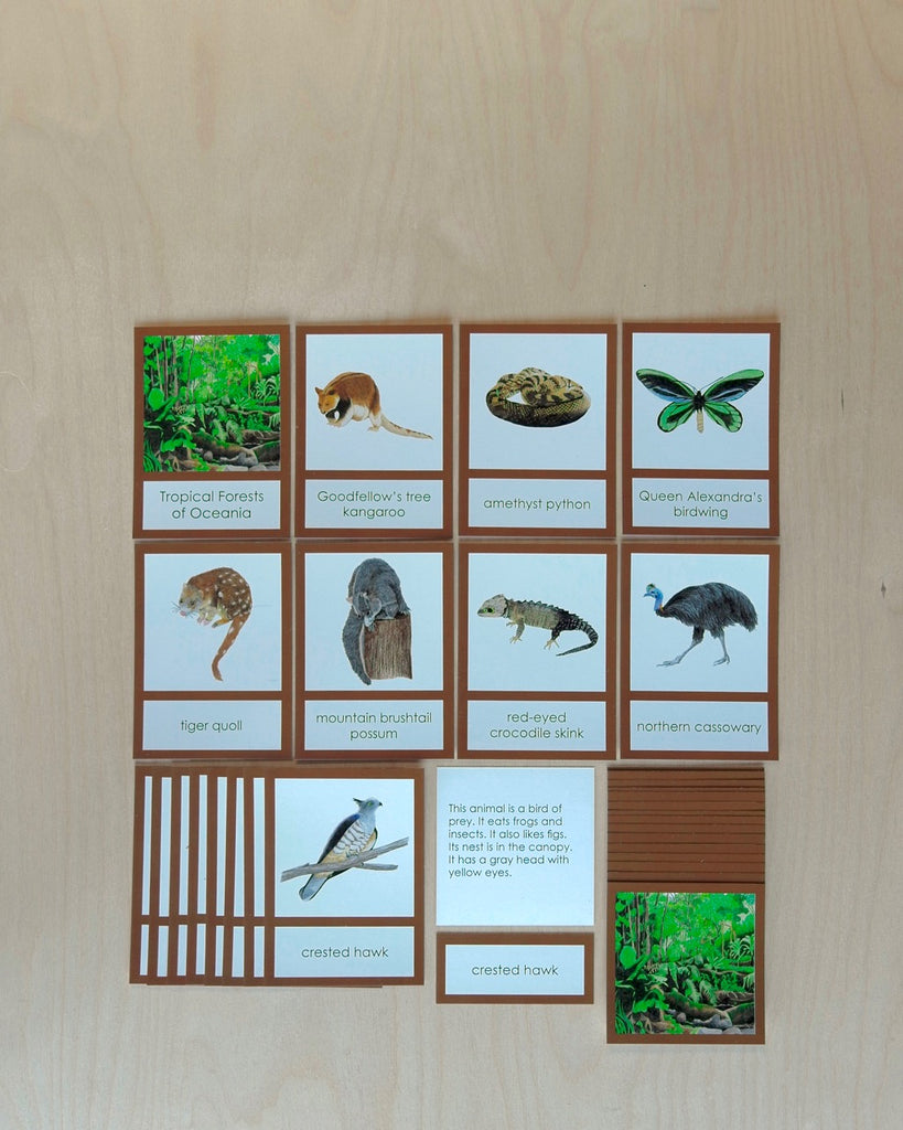 Oceania Biome Cards-Primary