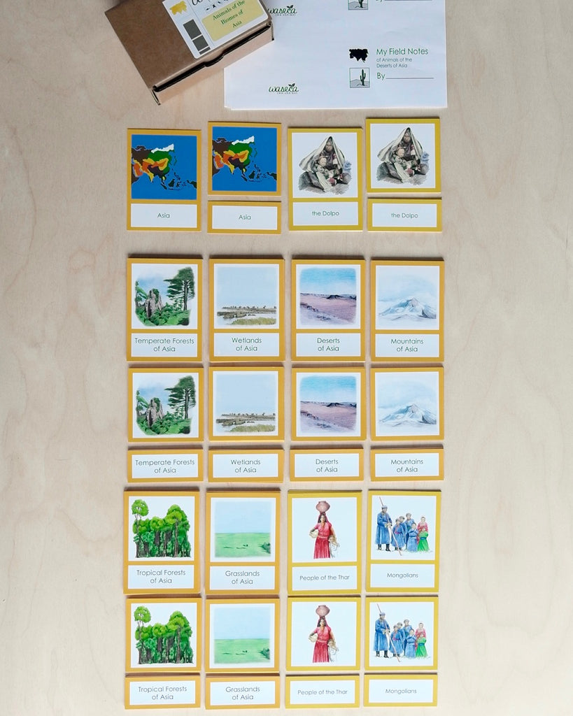 Complete Set of Biome Cards for the Continents-Primary