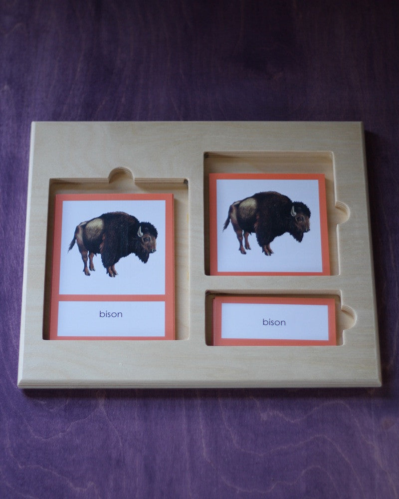 Three-Part Card Tray