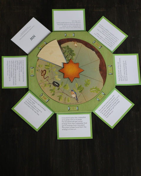 Wheel of Life-Food Chain in the Temperate Forest Puzzle
