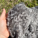Otto - Grey Curly Kid Mohair