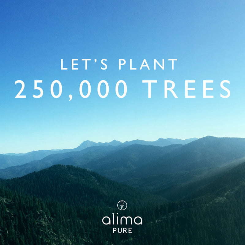 Let's Plant a Forest Together