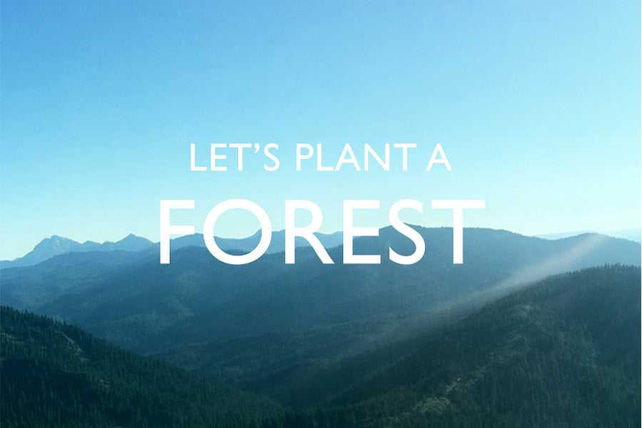 Let's plant 250,000 Trees together