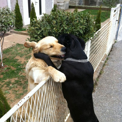 Happy National Hugging Day!