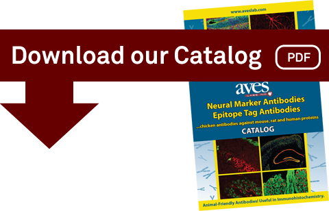 Download the Aves Labs Catalog