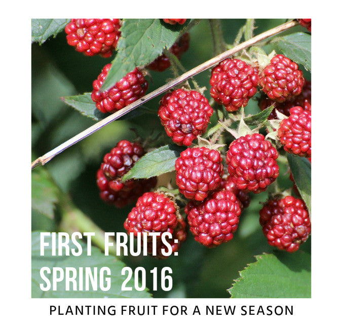 Planting Fruit Trees: Spring 2016
