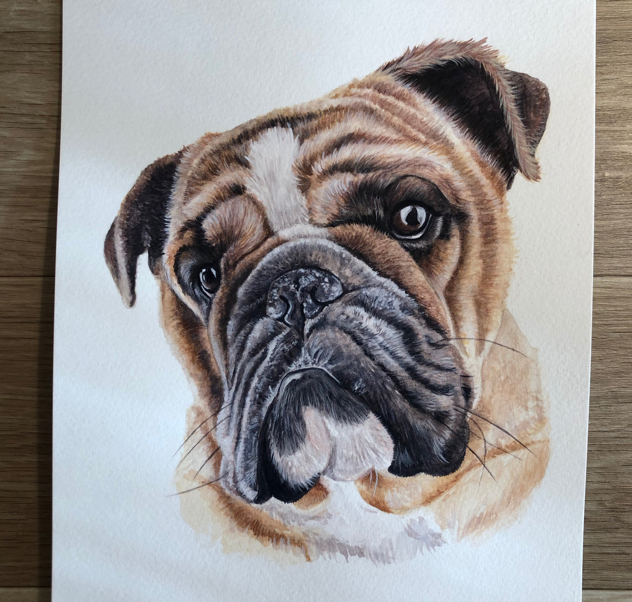 Koba the English Bulldog