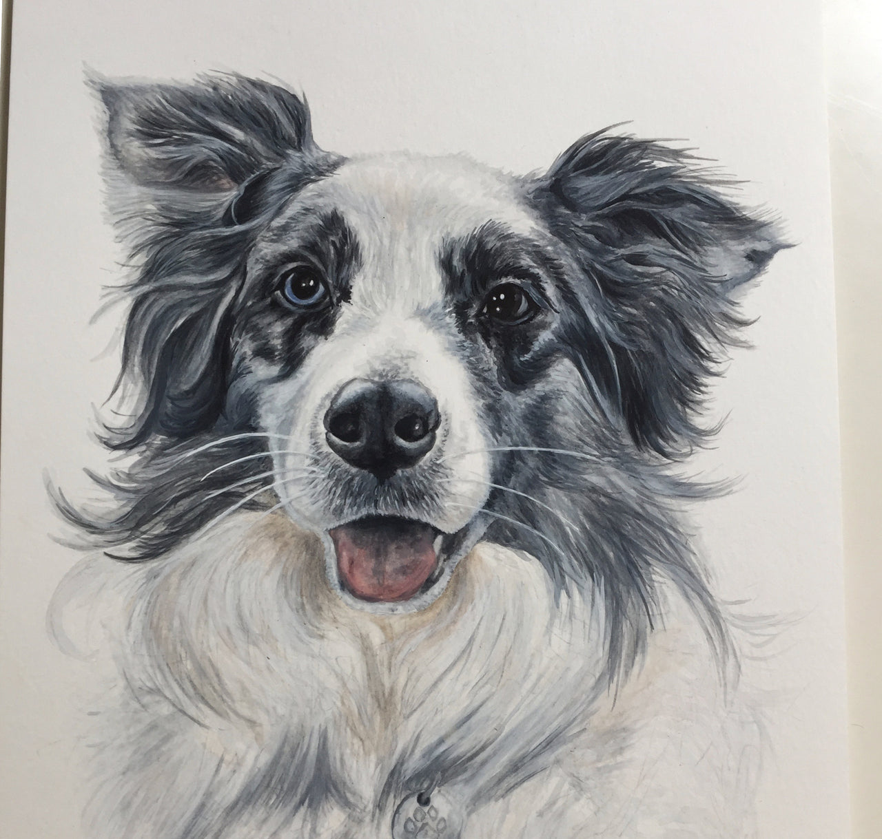 Bowie the Blue Merle Collie
