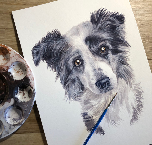 Pippa the Blue Merle Collie