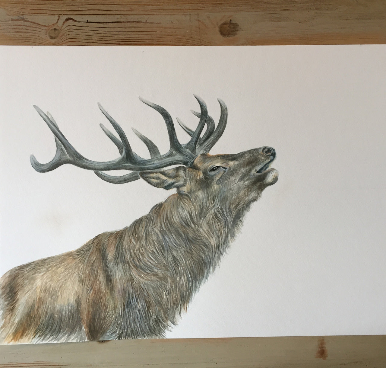 Red Stag - Wildlife Painting