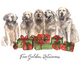 Twelve Dogs of Christmas Cards
