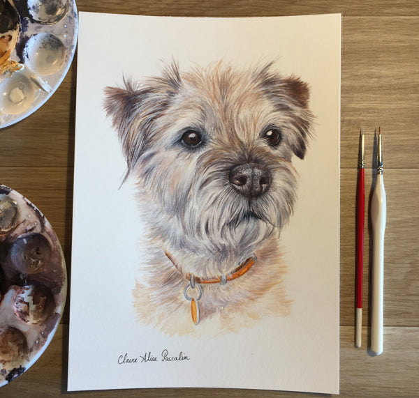 Sparky the Border Terrier