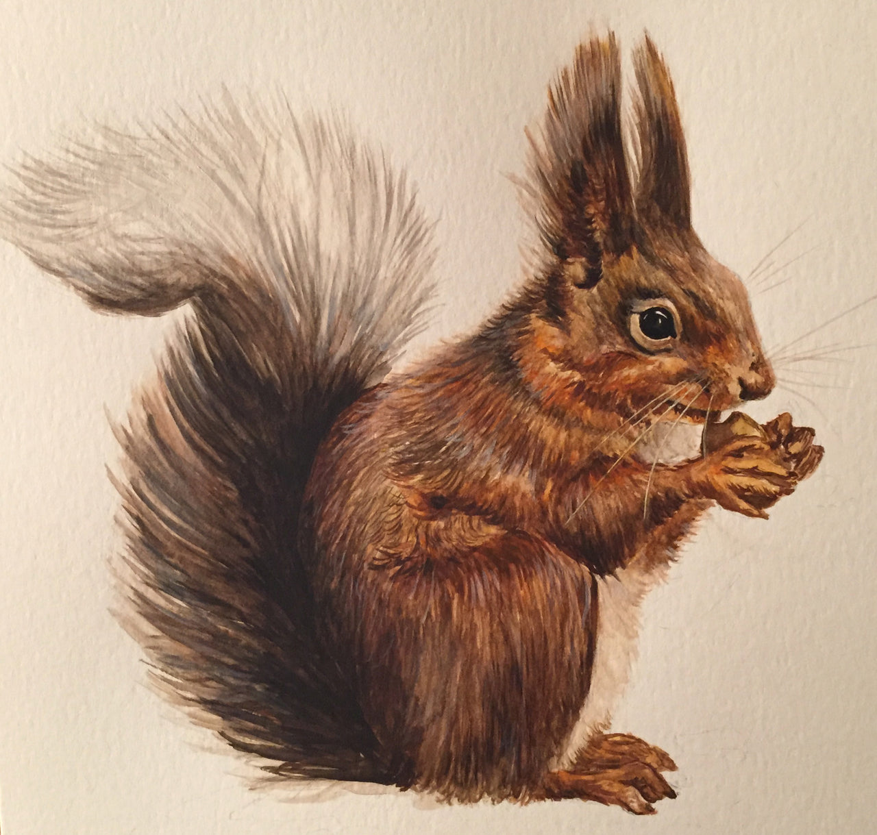 Squirrel - Wildlife Painting