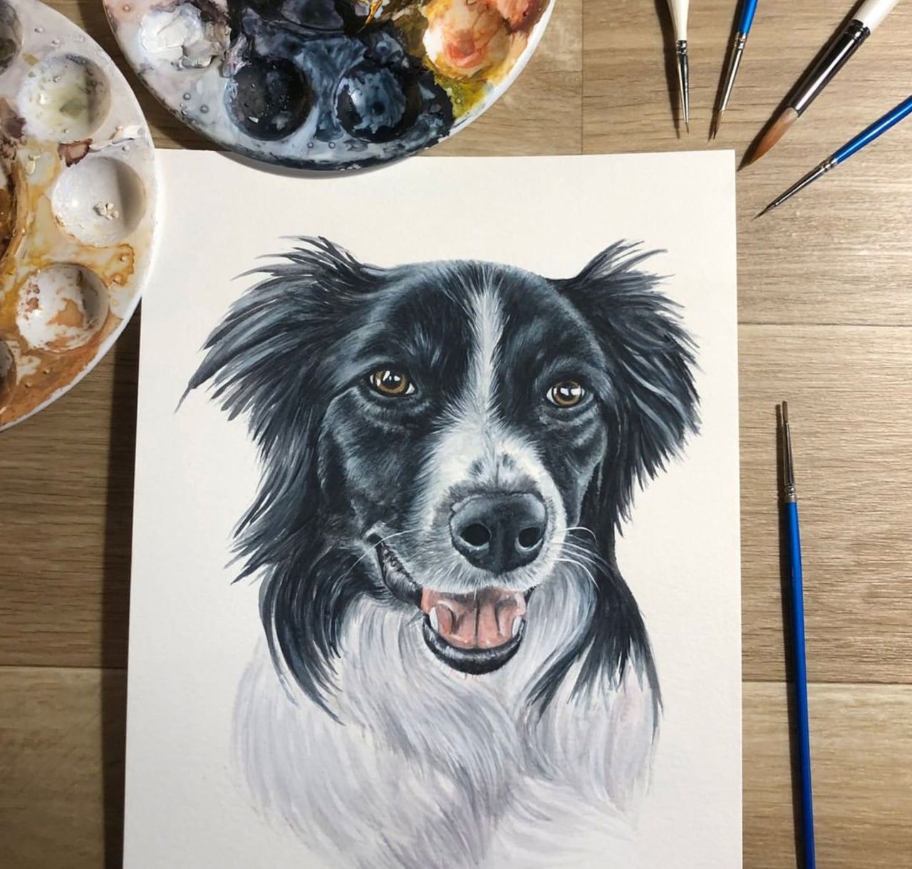 Emma the Border Collie