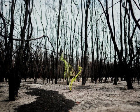 Tree growing amongst charred trees - Martin Von Stoll