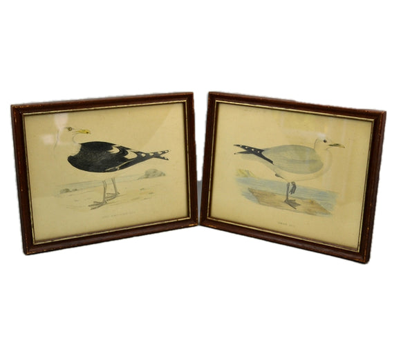 Pair of Framed Sea Bird Prints
