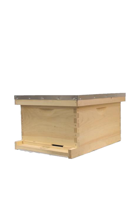 Single Deep Hive - 10 frame - Plastic - UN