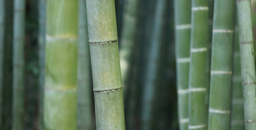Focus on Ingredients: Bamboo