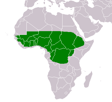 Map of Africa showing area where shea trees grow