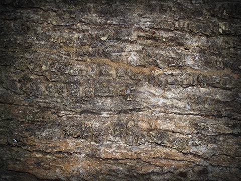 Tree bark - abstract dry skin
