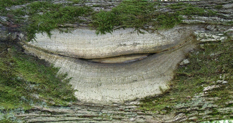 Formation on a tree shaped like lips