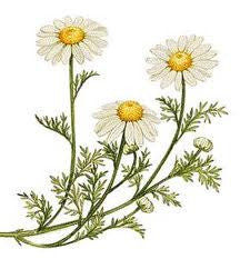 Essential Oil Blend Calming (Chamomile Bergamot) 1/8 oz