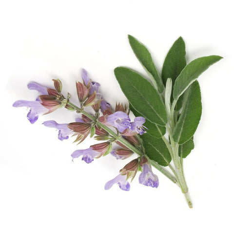 Essential Oil - Clary Sage 1/8 oz
