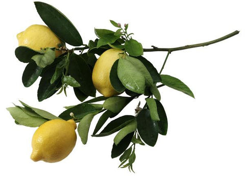 Essential Oil - Lemon (Organic)