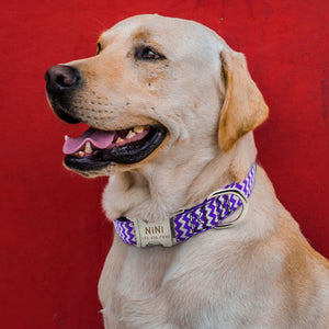 Zigzag Personalized Dog Collar - Urban Doggo