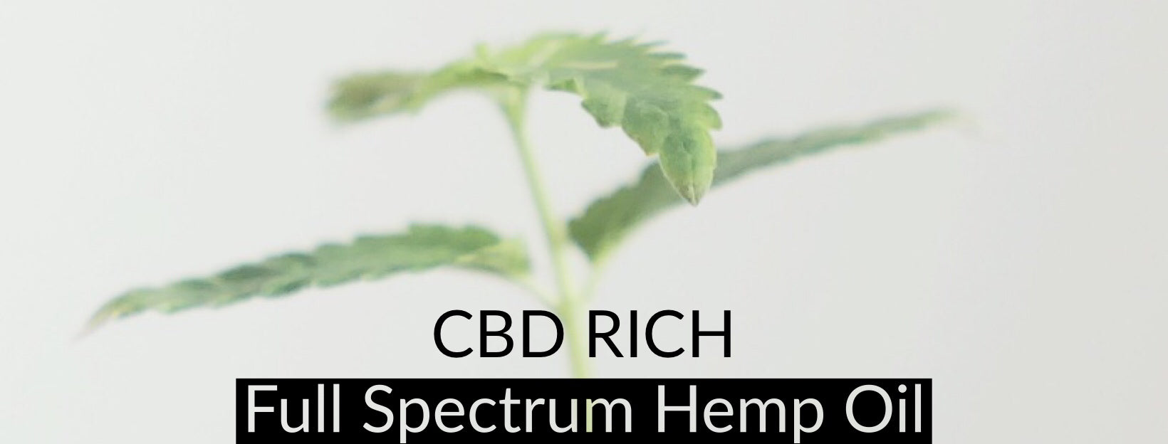 The Ultimate Guide to Full Spectrum CBD Oil