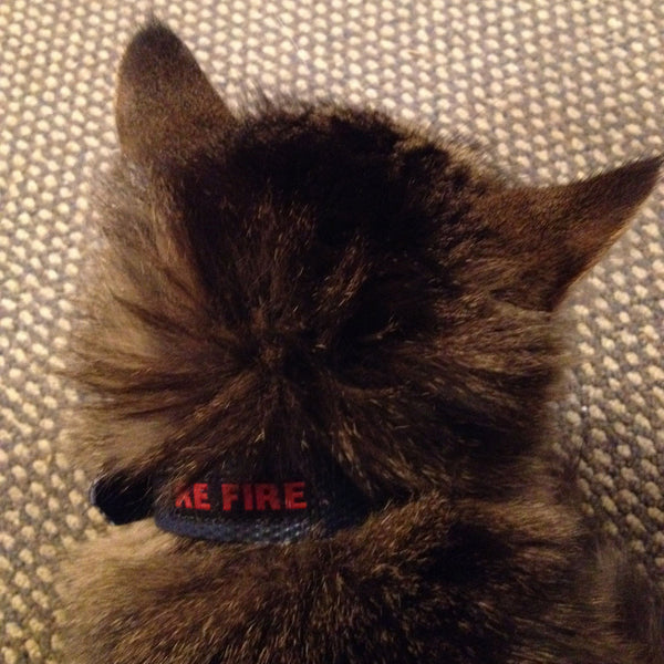 pet collar - recycled fire hose