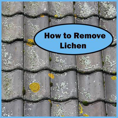 Remove Lichen from Roofs, Concrete, Pavers & Trees