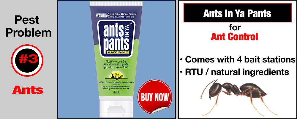 Ants In Ya Pants for Ant Control