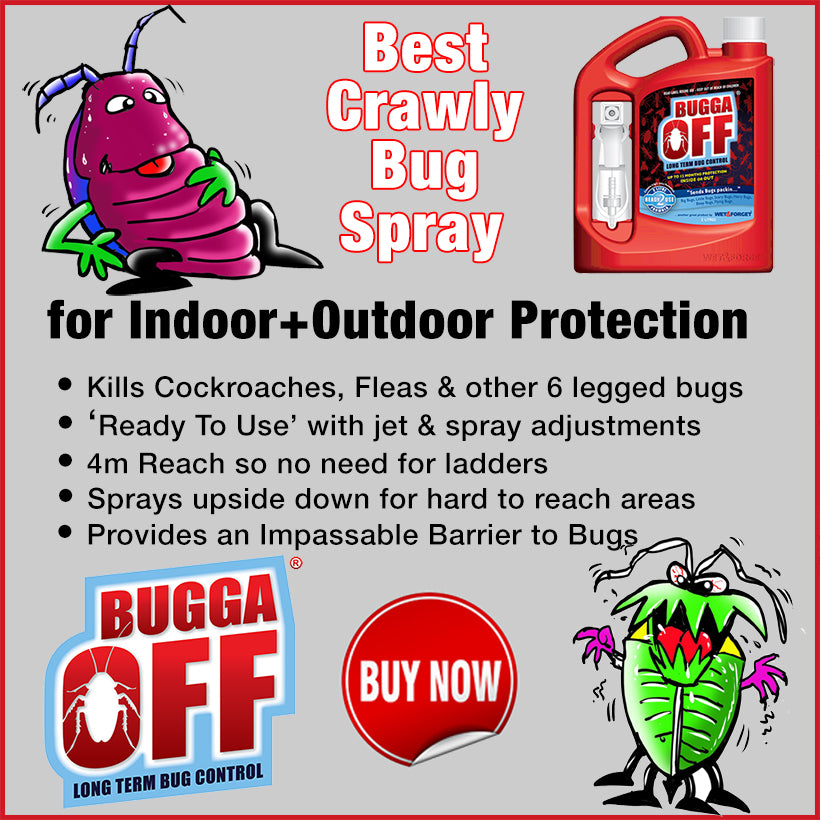 Get Rid of Cockroaches with Bugga Off