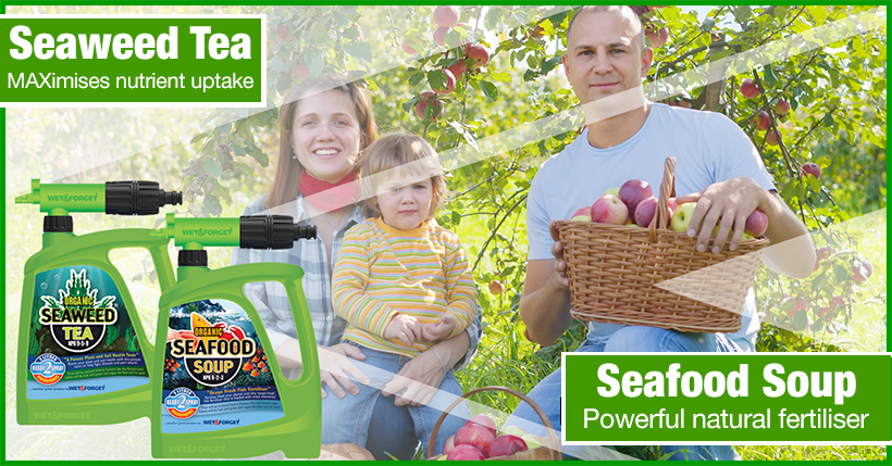 Seaweed Tea & Seafood Soup re the Best Combination For Amazing Garden Growth