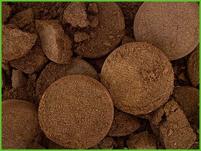 Coffee grounds act as a fertiliser, adding organic material to the soil