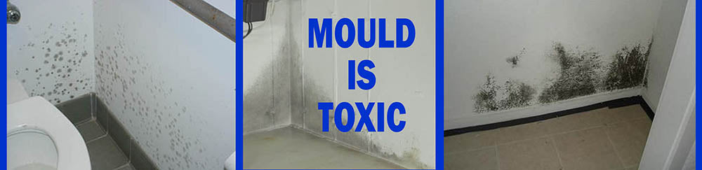 Indoor Mould is Not Good For Your Health
