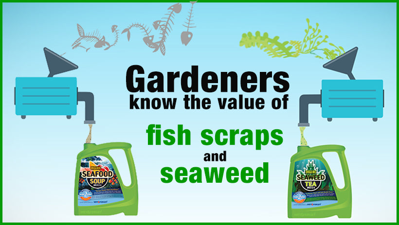 Gardeners all know the value of seaweed and fish scraps