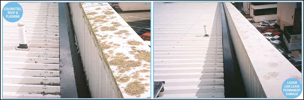 Lichen Eats into Your Roof - Get Rid Of it with Rapid Application