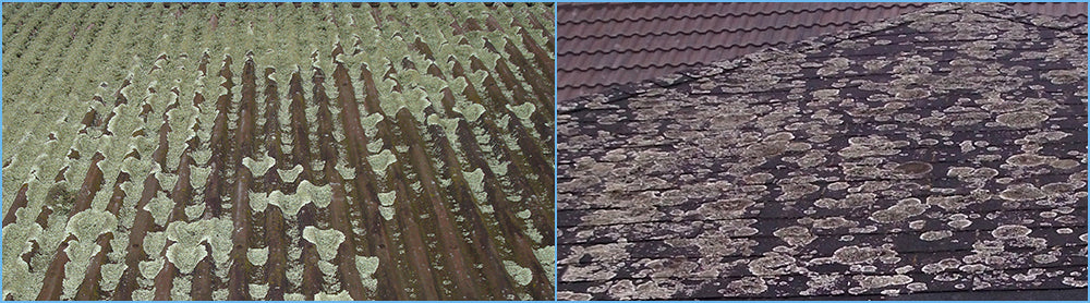 Lichen Will Damage Your Roof So Clean it Today