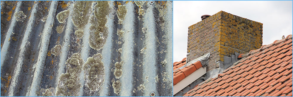 Lichen Damages Your Roof So Get Some Rapid Application Today