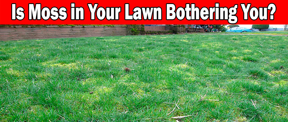 Moss in your lawn can be fixed