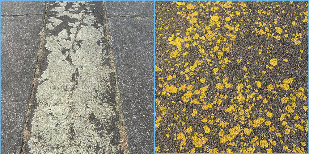 Remove Lichen Off Concrete with Wet and Forget products