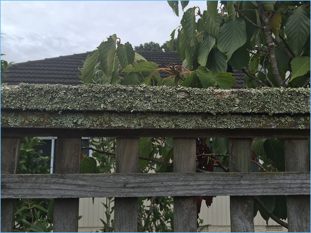 Removing Lichen from Timber Surfaces