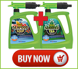 Buy Seaweed Tea and Seafood Soup For Your Garden's Growth NOW