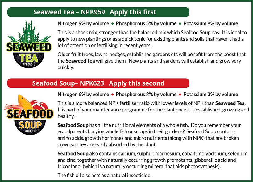 When and How to Apply Seaweed Tea and Seafood Soup