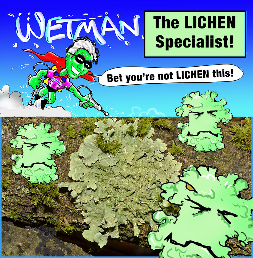 Wet & Forget are the Lichen Specialists