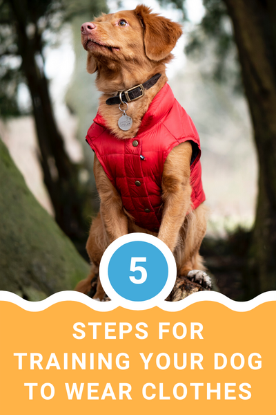 10 Must Have Summer Dog Accessories